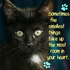 Quotes About Cats Realmenlovecats Httpcoleandmarmalade  Quotes About Cats .