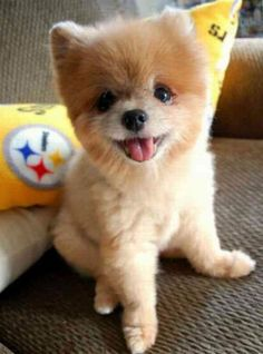 21 Best Dogs Images Fluffy Animals Pets Adorable Animals