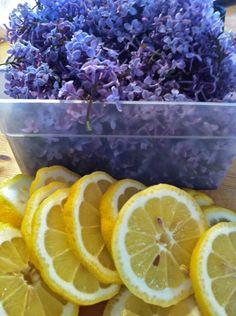 Sorbet, Grapefruit, Herbalism, Orange, Garden, Food, Yum Yum, Lemon, Herbal Medicine