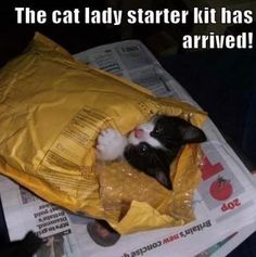 The cat lady starter kit has arrived .. haha yes! Cute animals, funny animals, humor, kitty, kitten, Oh BABY! Cute Kids & Baby Animals http://www.pinterest.com/wineinajug/oh-baby-cute-kids-baby-animals/