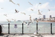 Seagulls at Brighton pier