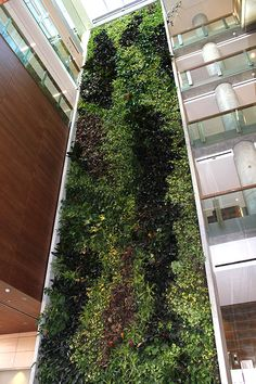 Living Wall Biofilter in the University of Ottawa's Social Sciences Building