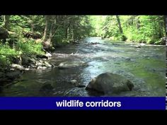 Creating wildlife corridors is one of the topics in this week's Riverwatch.