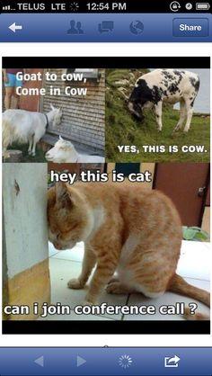 Cats. Lol