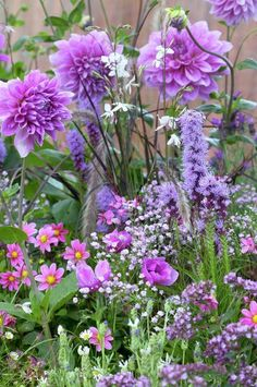 Dahlias, windflowers, baby's breath and pennisetum: pink and lilacs at their best. • Gardening Inspirational Sets • 99Roots.com