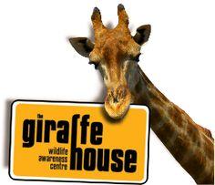 Giraffe House Educational Programs, Wildlife Conservation, School Holidays, Bird Species, Cape Town, Giraffe, Wallpaper Ideas, Africa, Bucket