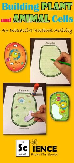 Help your students compare and contrast plant and animal cells with this activity to use in an interactive notebook and much more.