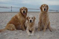 Pine Island Florida ..beach day for dogs   Brie,Bentley and Tyler