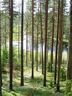 #Dalarna  #Sweden