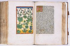 "English: Hand-coloured woodcut from Konrad von Megenberg (1309-1374) - ""He nach volget das Puch der Natur"" - Augsburg: H. Bamler, 1475 The scholar and cleric Konrad von Megenberg compiled his encyclopedic Book of Nature in the fourteenth century from a number of earlier authorities. The fifth chapter discusses 89 plant species arranged in no particular order. The woodcuts are the first printed depictions of plants presented for botanical rather than decorative purposes."