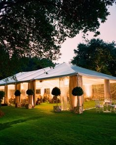 The Reception - topiaries outside the tent