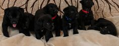 Puppies that had been left for dead in a California dumpster (Pet Network Humane Society)