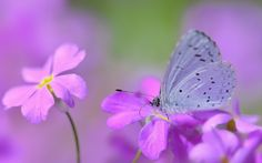 1920x1200 free wallpaper and screensavers for butterfly