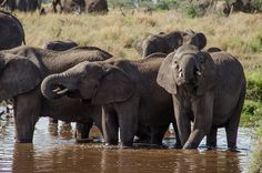 Friends dig a pond so elephants can beat the heat.