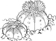 Drawing cactus universul copiilor: Imagini de colorat cactus