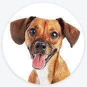 Pet Supplies Pet Food And Pet Products Petco Food Pet