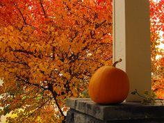 a lone pumpkin among the leaves