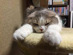 にょーたろー@居眠りが得意なフレンズ(@sukeyotafumi)さん | Twitter