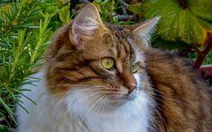 Kastracja a sterylizacja kota