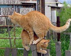 Twister voor katten