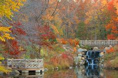 Uno dei parchi cittadini di New York, dove ammirare il foliage (foto Alamy/Milestone Media)