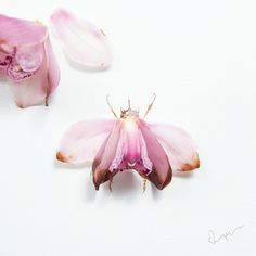 Limzy - A beetle bug made of a wilted cymbidium, or commonly known as boat orchid