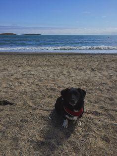 #Dog #goodboy #beach #summer #travel #ocean #beachdog #doggy #rescuedog #love #happy #ireland