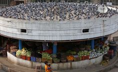 Flock market: Pigeons gather over shop in India.  Pigeons sit on the roof of a vegetable shop in Hyderabad, India, Sept. 29.  By Kumar A. Mahesh / AP