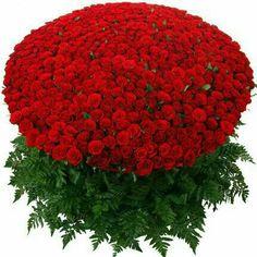 Basket arrangement of Premium Red Roses arranged with seasonal foliage.