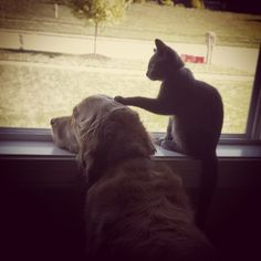 猫と犬の仲良し画像 31|ねこLatte+