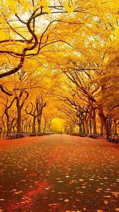 Yellow Canopy, Central Park, New York City by echkbet