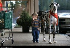 Tall Spotted Dog - funnydogsite.com