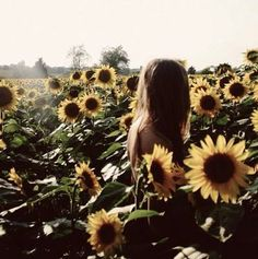 sunflower fields.  color only the yellow in the flowers