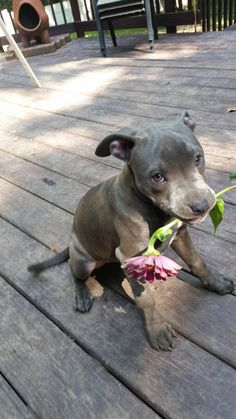 In loving memory of the millions of dogs and cats murdered in the United States…
