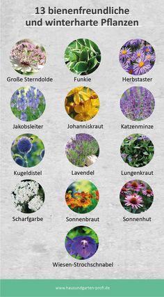 Garden Paths, Garden Landscaping, Dream Garden, Home And Garden, Nature Aesthetic, Bonsai Plants, Balcony Garden, Garden Planning, Garden Inspiration