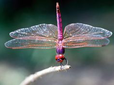 dragonflies are cool and beautiful