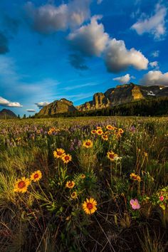 Early morning sunshine, wildflowers and puffy clouds dance along the mountains in Glacier National Park. Photo by Paul Holdorf Beautiful World, Wild Flowers, Monument Valley, National Parks, Scenery, Clouds, Mountains, Nature, Instagram Posts