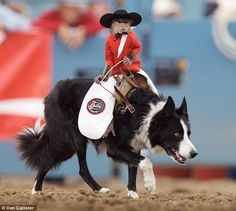 Bud the border collie and Whiplash the Rodeo Monkey