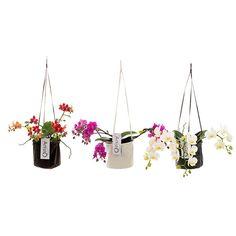 Artisto #flower #plant #design #home #accesoires #florist #inspiration   Design logo Mangoa ontwerp ism Trendlogic