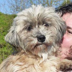 Anora vaa16975   Type : Chien croisé Sexe : Femelle Age : Senior Taille : Petit Lieu : Seine-et-Marne - 77 (Île-de-France)  Refuge :  REFUGE SPA DE VAUX LE PENIL(Seine-et-Marne) Tél : 01 60 56 54 60 Seconde Chance, Adoption, All Dogs, Pets, Animals, Rat Dog, Adorable Animals, Dogs, Adopt A Dog