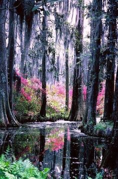 It almost looks like a painting at first glance - Cypress Gardens, Florida (which is now LEGOLAND Florida)