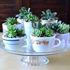 Bom diaaaa! Muito lindo ou pouco lindo? 🍃😍🍃 As suculentas plantadas em xícaras dão um ar retrô e romântico a casa.  Foto: reprodução