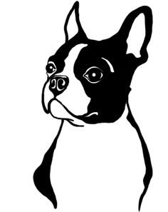 Boston Terrier <3