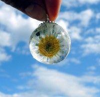 Ein Stück Natur für die Ewigkeit - Gänseblümchen