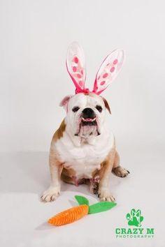 Easter Bully 2012 Love