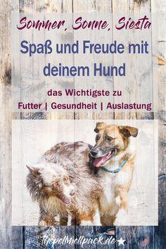 Hund im Sommer ❤ Wir verraten Tricks und Tipps zu Futter, Abkühlung, Auslastung, Gesundheit und wie du einen Hitzschlag beim Hund erkennst. | thepellmellpack.de