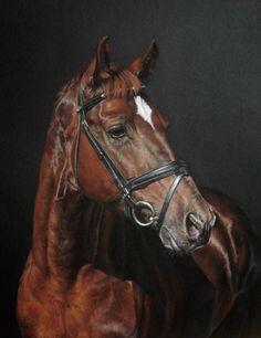 Horse pastel drawing by Leskart - Trakehner stallion Globus (Belarus)