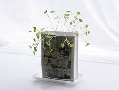 Manga plants Koshi Kawachi