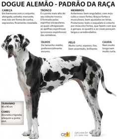 Ideas Dogs Breeds Chart Pets For 2019 Dog Breeds Chart, Dog Chart, Dog Heaven Quotes, Dog Quotes, Dog Wallpaper, Dog Runs, Dog Names, Dog Walking, Pet Shop