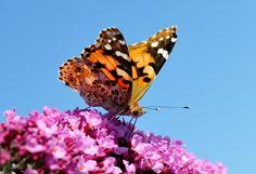 La disparition des papillons expliquée aux enfants